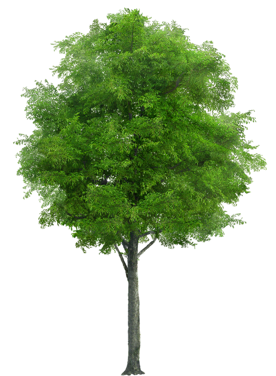 tree_PNG3477.png