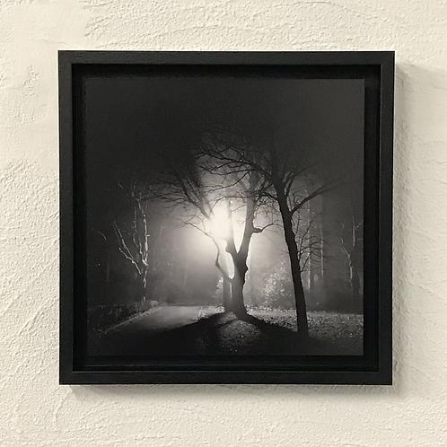 photo encadrée en caisse américaine noire - une lueur dans la forêt