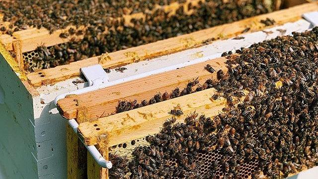 Honeybee Hive Tour & Tasting - June 13 (2-4pm)