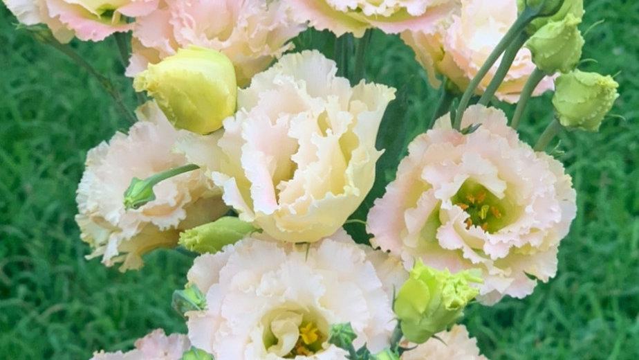 Lisianthus Cut Flower Collection (10 plants)