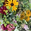 "Thumbnail: ""Grow Your Own Bouquet"" Cut Flower Collection (12 plants)"