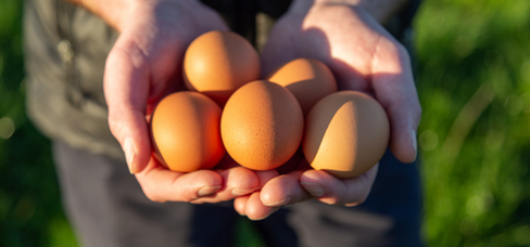 LocalFood_home_eggs.png