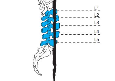 Recomendaciones para tratar y prevenir dolores en la espalda baja
