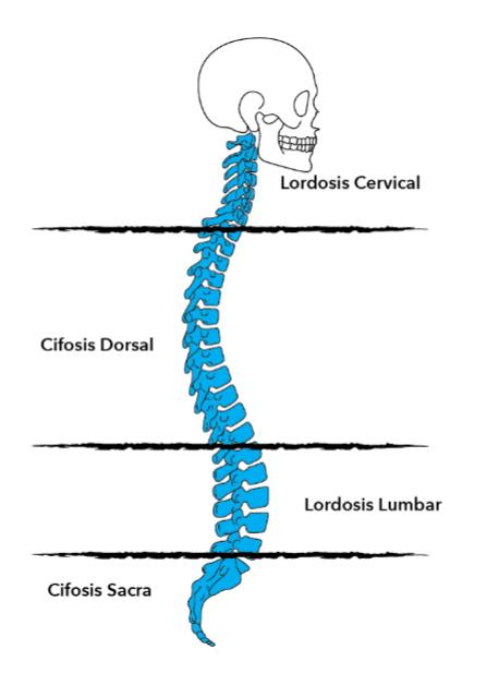 alineacion-de-la-columna-vertebral