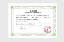Exhibition Certificate