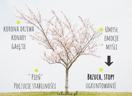 """""""Jesteś jak drzewo"""" - metafory, które przemawiają do naszych dzieci cz.I"""
