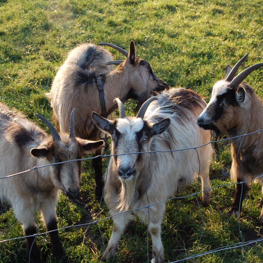 alle geiten 2008