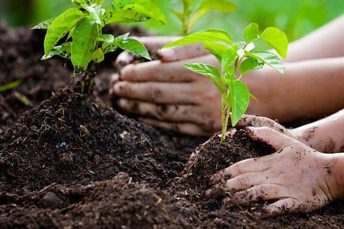 10 trees planted