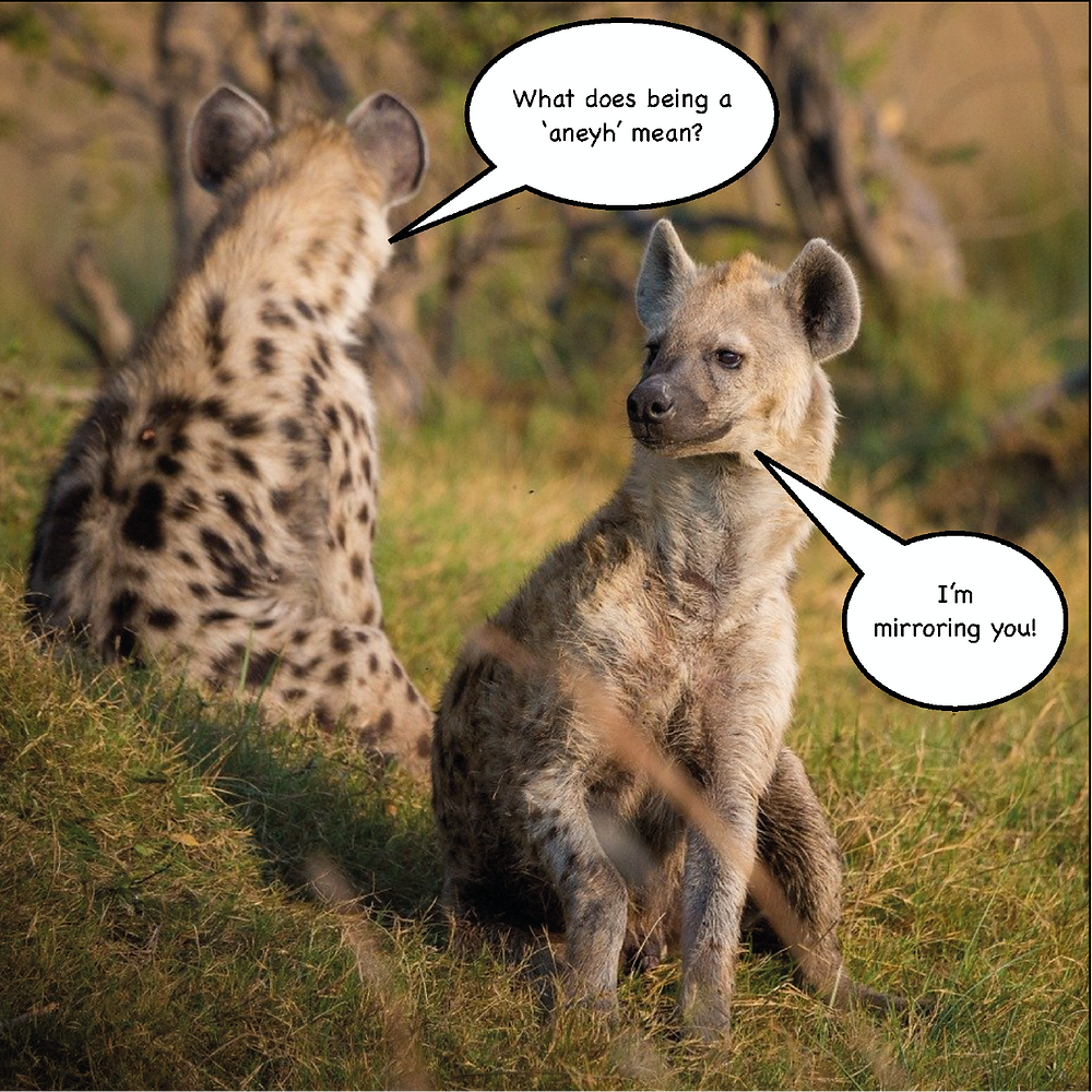 Two Hyenas, one facing forward, one facing backward