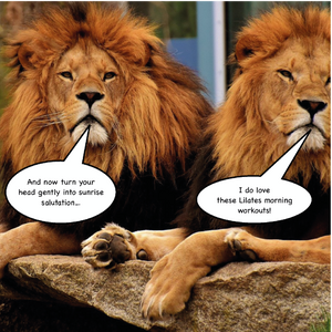 Two lions discussing their morning Pilates exercises
