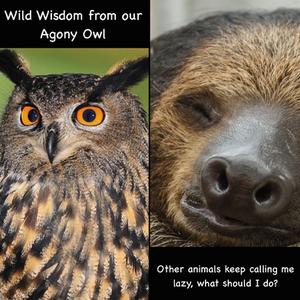 Agony Owl helps a Sloth
