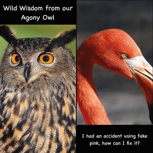 Agony Owl helps Flamingo