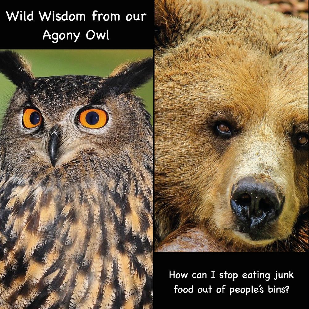 Agony Owl helps Grizzly Bear