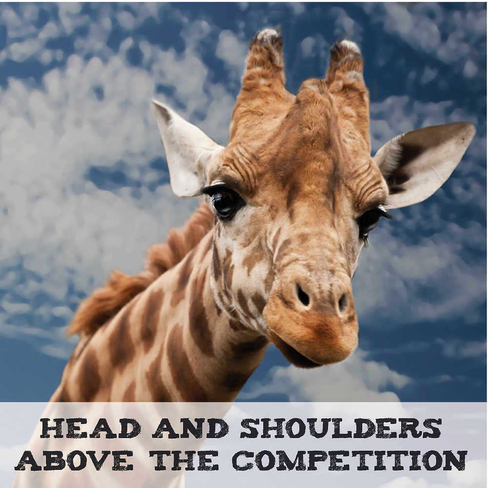 A Giraffe is Head and Shoulders above the competition