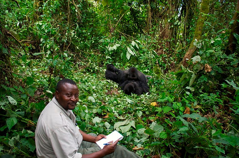John Kahekwa with two gorillas.jpg