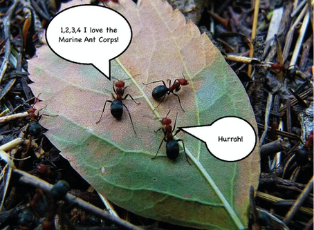 Army Ants Launch Marine Corps in Response to Climate Change