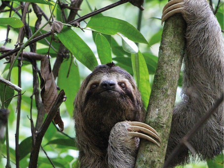 Sam the Sloth Launches New Mindfulness App