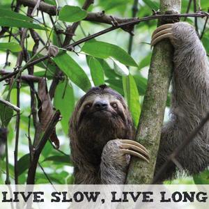 Sloth on a tree, Live Slow, Live Long.