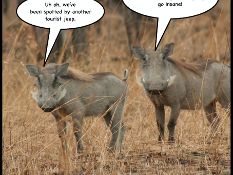 "Warthogs Share Plea to Tourists: ""please stop singing Hakuna Matata"""