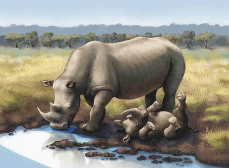 Is Fake Rhino Horn a Fake Solution