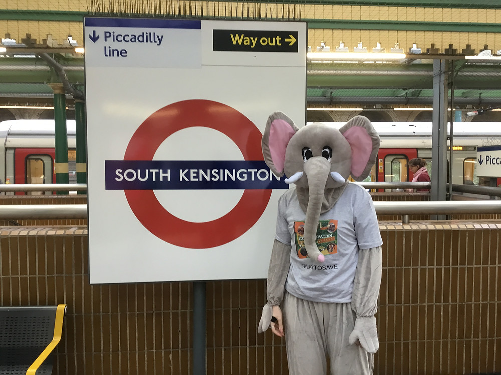 Tunza the Elephant on the Tube