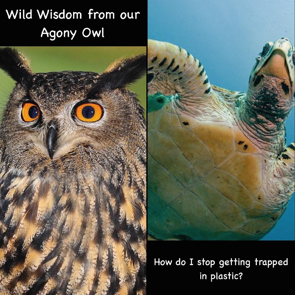 Agony Owl helps Tortoise