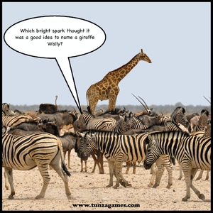 A picture of Wally the Giraffe standing tall above a herd of Zebra