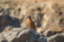 birds (1 of 1)-3.jpg