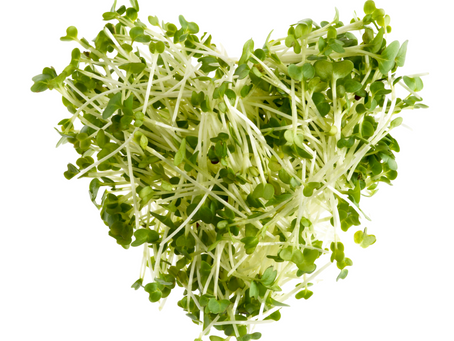 The 7+ Benefits of Sulforaphane through broccoli and kale sprouts