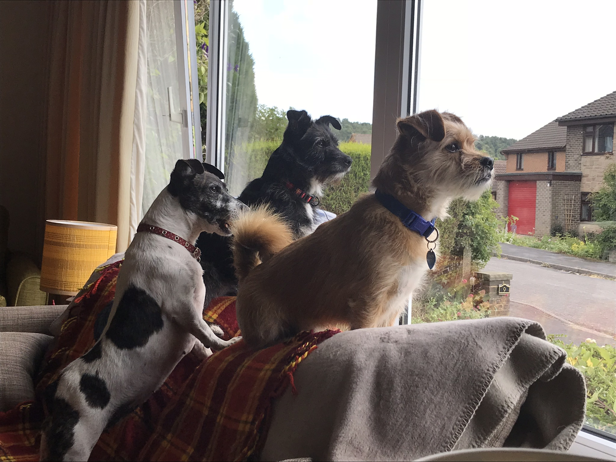 3 at the window.jpg