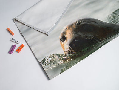 Seal Tea Towel.jpg