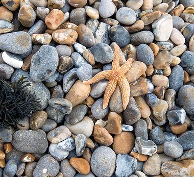 Pebbles & Starfish.jpg