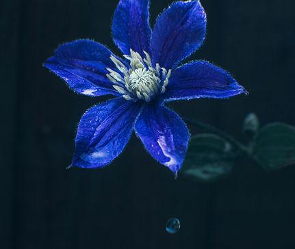 Blue Flower in the Rain