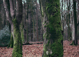 SPEULDERBOS // A VISUAL STORY #001
