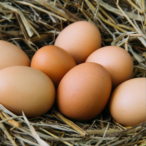 20 Free Range Eggs