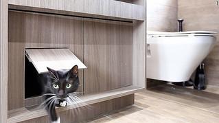 CNN Style - Cat flats: designing human apartments for feline friends