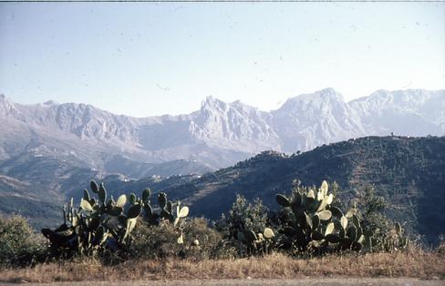 Djurdjura-fjellene i bakgrunnen og ti la