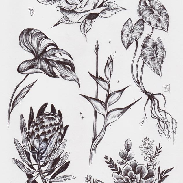 Pat's plants013[3332].jpg