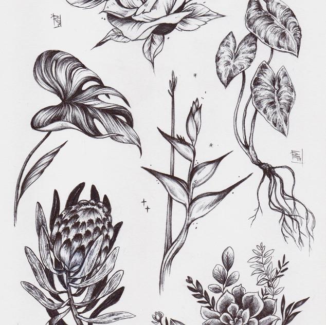 Pat's plants013[3328].jpg