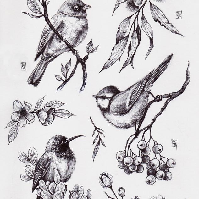 Pat's birds012[3326].jpg