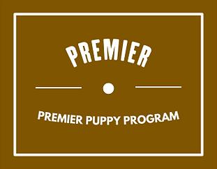 premier-puppy-image(2).png