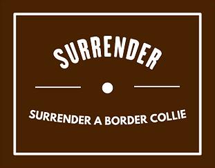 surrender-image.png