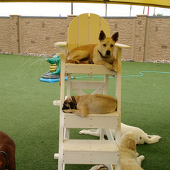Dogs in Lifeguard chair May 2015.jpg