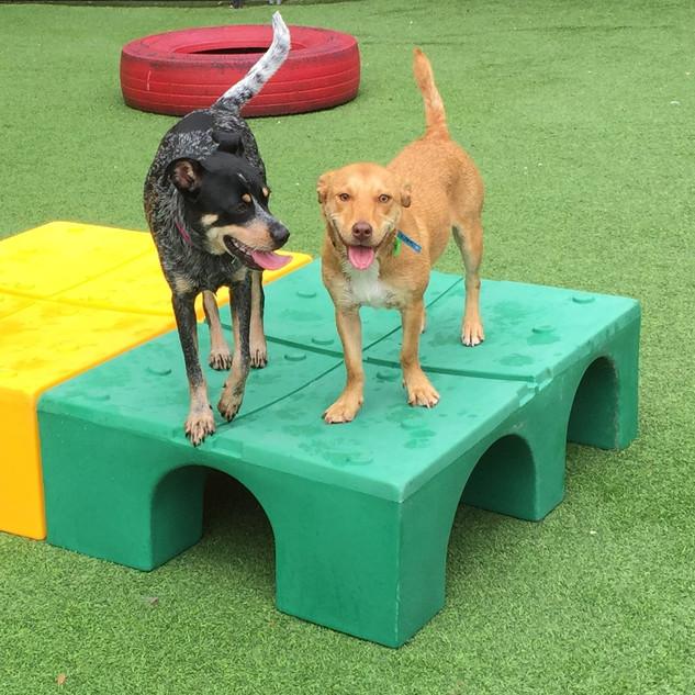 Cute Small dog playground pic.JPG