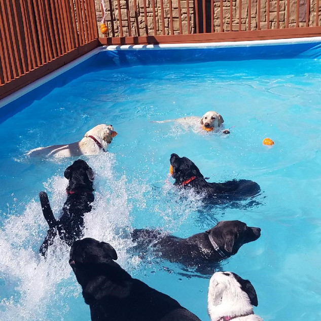 great pool pic.jpg