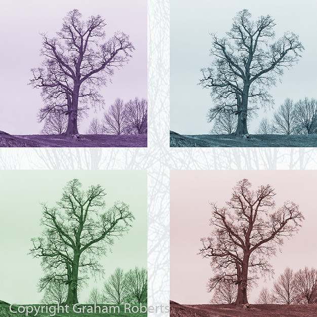 4 Tree Colours
