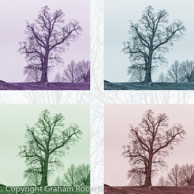4 Tree Colours