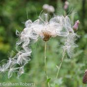 Seeds Taking Flight