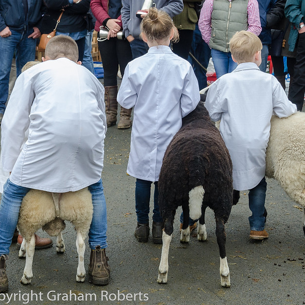 Young Sheep Farmers