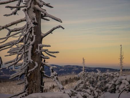 27.12.2020 Bayerischer Wald